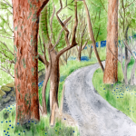 Blarbuie Woodland in watercolour. available in greetings card and print formats