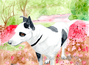 Patch, the dog - watercolour