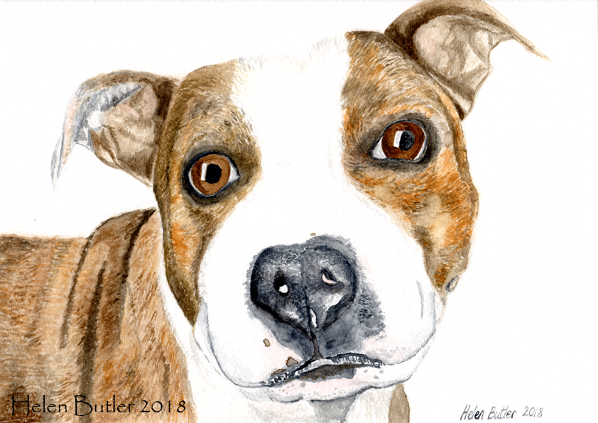 Harley the dog - watercolour