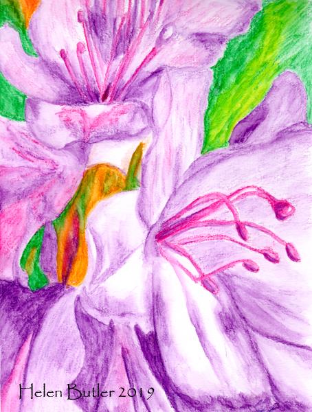 Azaleas - water-soluble crayons
