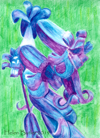 Bluebells - water-soluble crayons