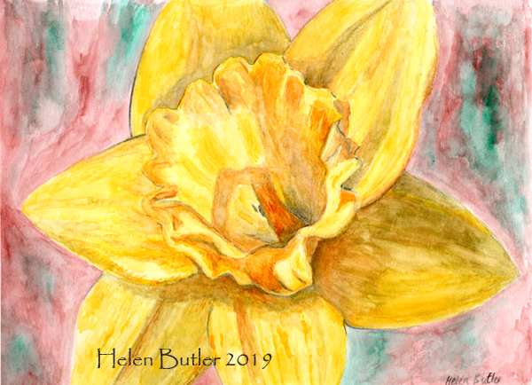 Stormy Daffodils - watercolour
