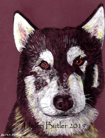Husky dog - pastel