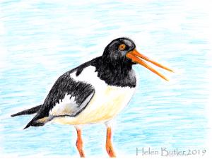 Oystercatcher - watercolour
