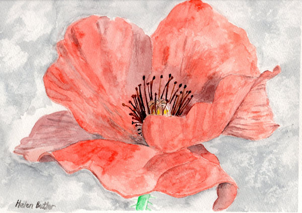 Remembrance Poppy - watercolour