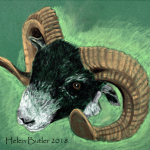 Pastel drawing of a ram, available in greeting card or print format