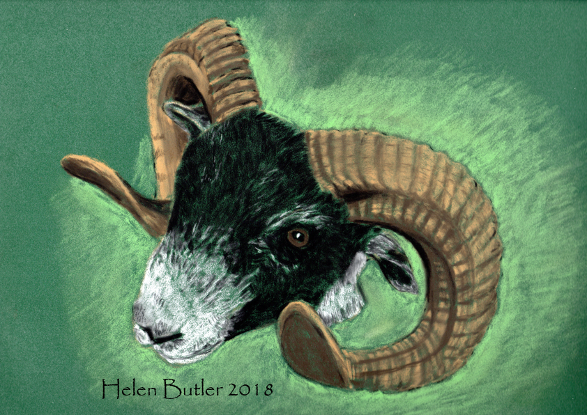 Pastel drawing of a ram