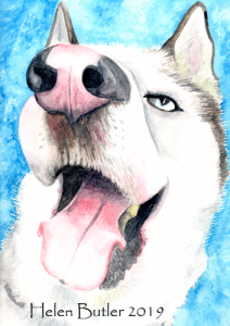 Husky dog - watercolour