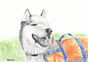 Husky dog on the canal - watercolour