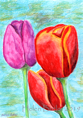Tulips - water-soluble crayons