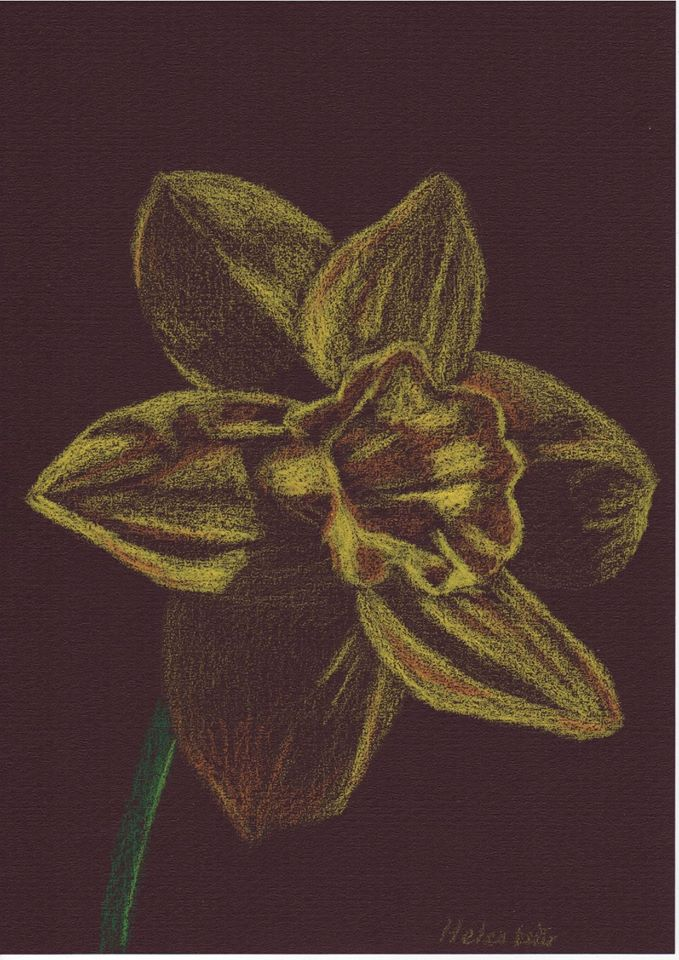 Lockdown Daffodil - water-soluble crayons