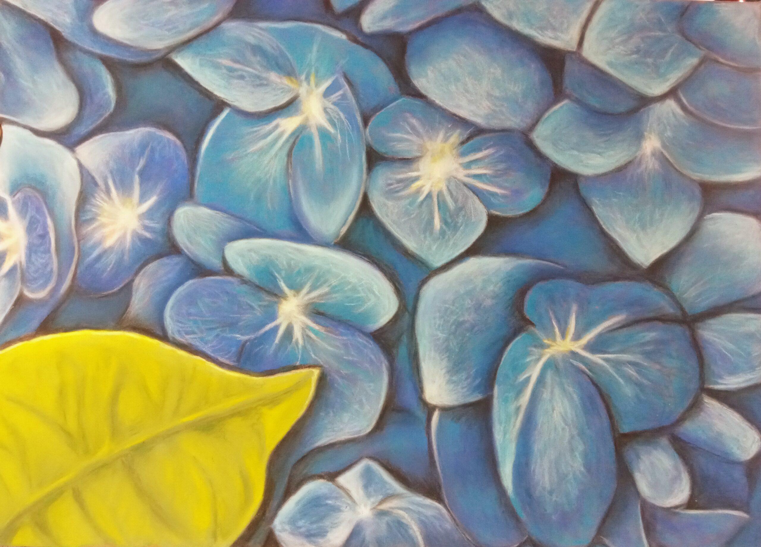 Hydrangeas - pastel