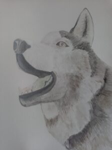 Husky - metallic watercolours