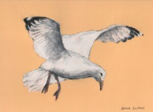 Seagull - pastel