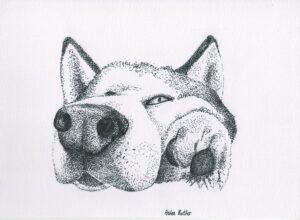 A dotty husky!