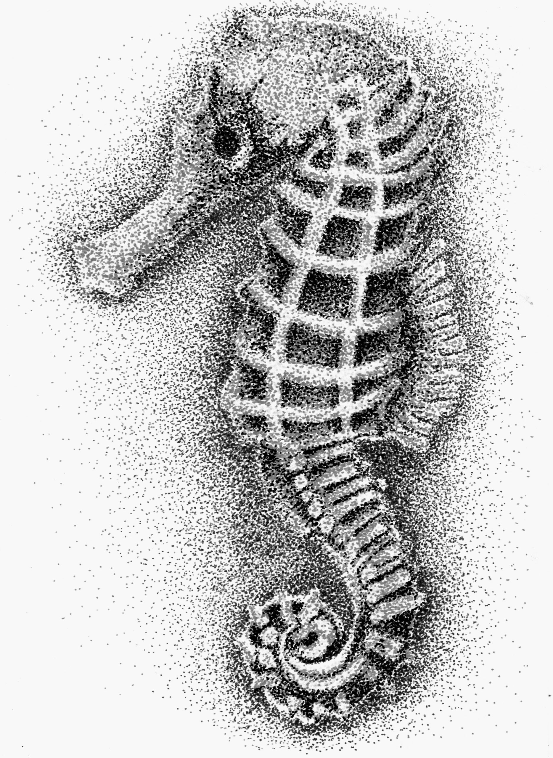 Black and white seahorse