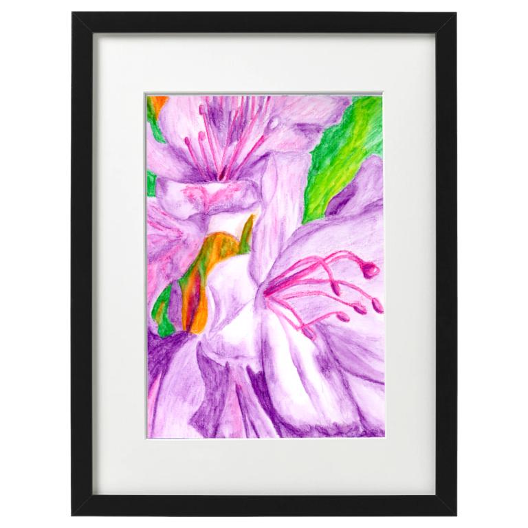 Azalias - Watercolour