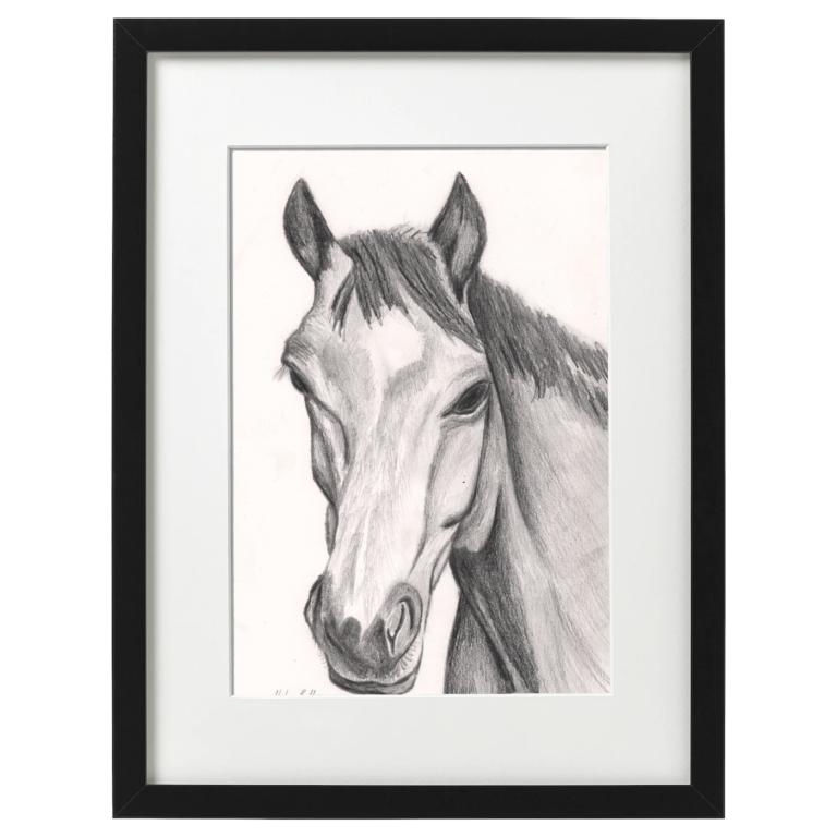 Pencil sketch of a horse