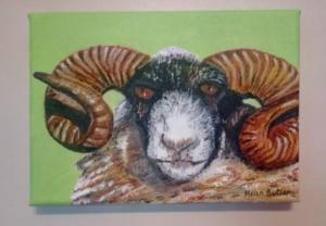 Acrylic painting of a Highland Ram