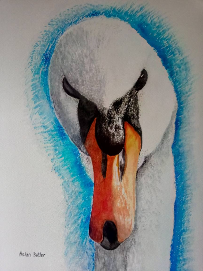 Watercolour painting of a swan