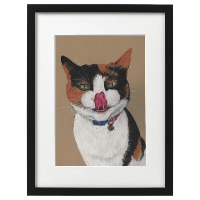 Cilla the cat