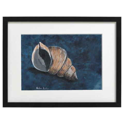 Whelk shell - Acrylic on A4 canvas board