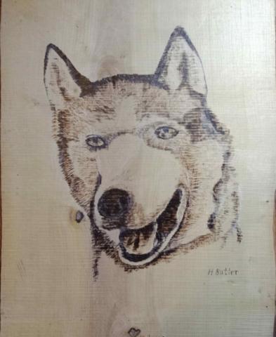 Pyrography Siberian Husky - work in progress